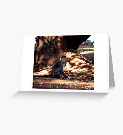Indian Monkey Greeting Card
