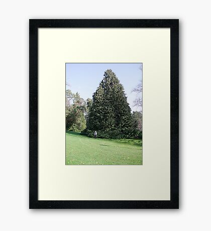 Beautiful Tree Framed Print