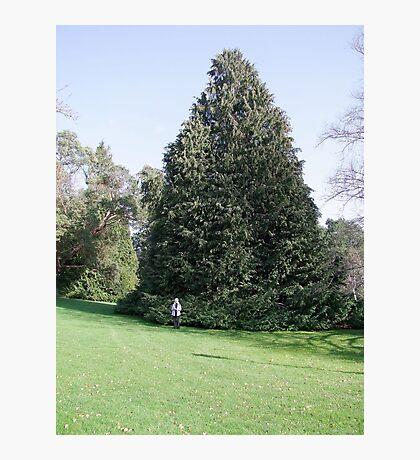 Beautiful Tree Photographic Print