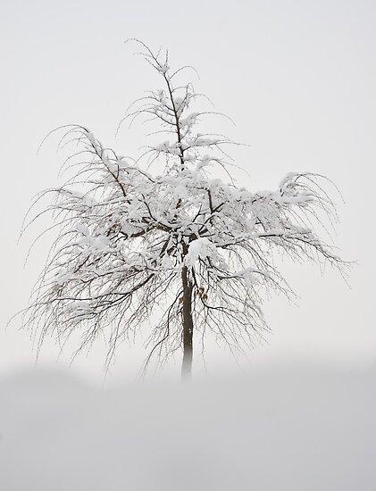 Winter Tree by Kasia Nowak