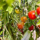 Tomatoes by Jaime Pharr