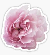 Wonderful pink peony Sticker