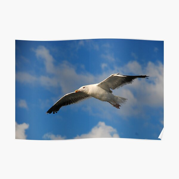 Jonathan Livingston Poster
