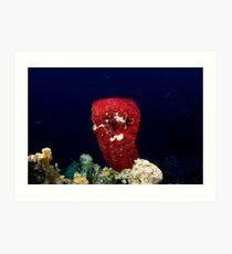Sponge and Crinoid Art Print