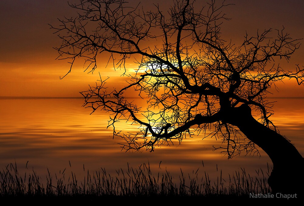 Burning Sky by Nathalie Chaput