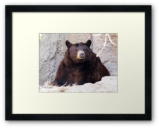 Black Bear by Kimberly Chadwick
