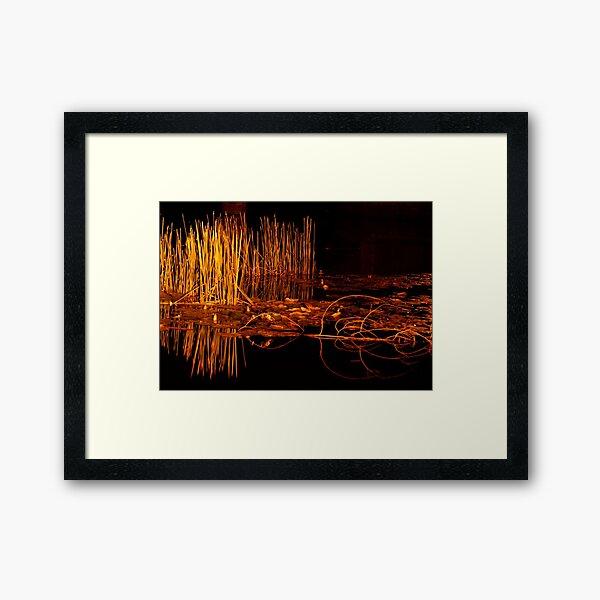 Golden Reeds Framed Art Print