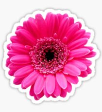Beautiful pink flower Sticker
