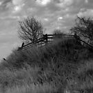 A Fency Hill in Black and White... by Larry Llewellyn