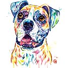 Boxer - colorful watercolor pet portrait painting by Lisa Whitehouse
