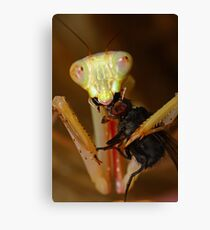 Jade mantis eating dinner Canvas Print
