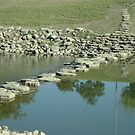 Stepping Stones in Trinity Park by Susan Russell