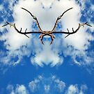 Antlers In The Sky by ARTofDIRT