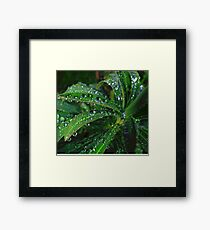 Nature's emeralds Framed Print