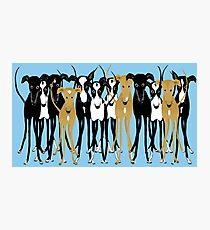 Greyhound-Zusammenkunft Fotodruck