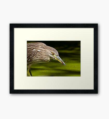 Snatched Framed Print