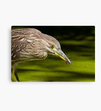 Snatched Canvas Print