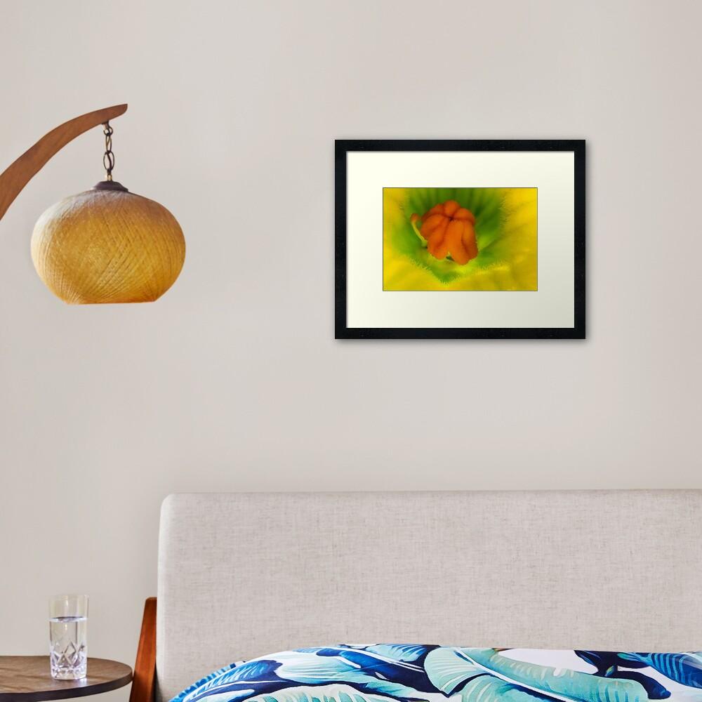 Cucurbita flower Framed Art Print