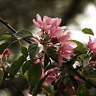 Blossoming by OldBirch