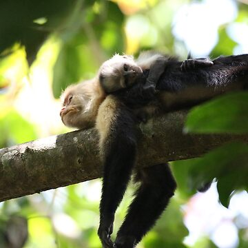 Capuchin mom resting with her baby by MoreThanCancer