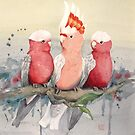 Wednesday Galahs by Sarah  Mac Illustration