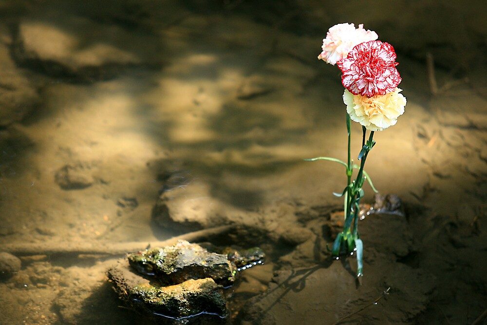 Carnations in water by Erik Anderson
