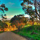 Hazy Meadows by Ben Mattner