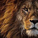 Lion by Igor Drondin