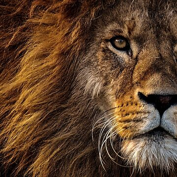 Lion by Goshadron