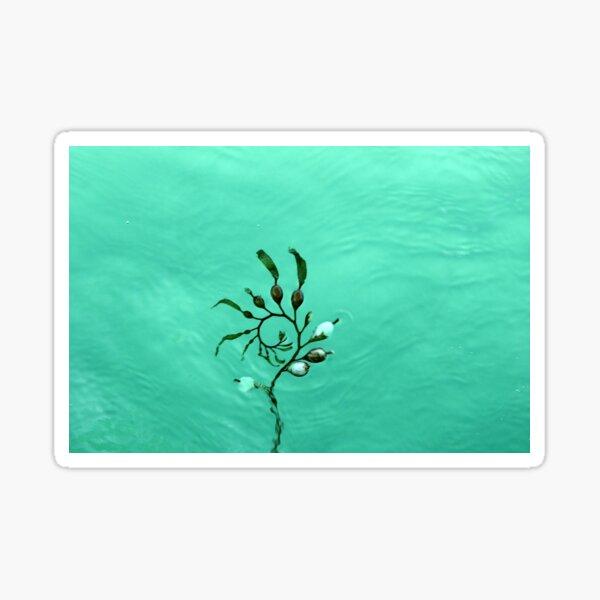 sea beauty Sticker