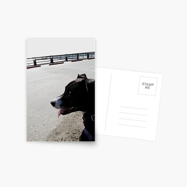 Puppy looking at the Pier Postcard