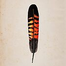 Red Tailed Black Cockatoo Feather (Female) by Daniel Watts