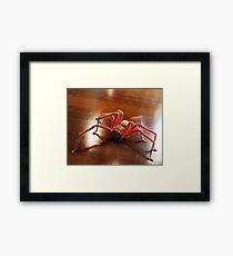 Creepy Spider (Arachnid) Framed Print