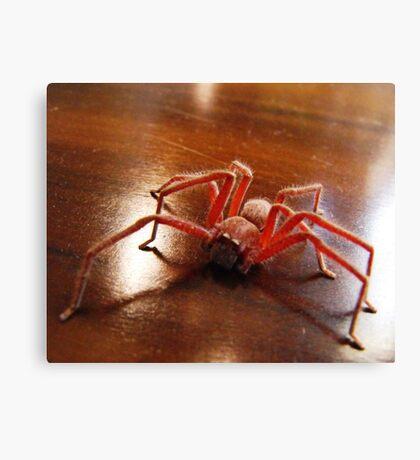 Creepy Spider (Arachnid) Canvas Print