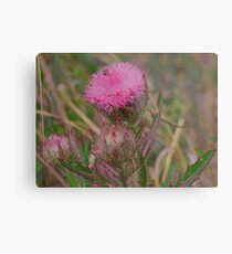 Horrible Thistle Metal Print