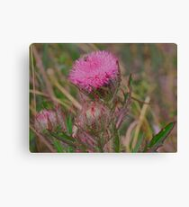 Horrible Thistle Canvas Print