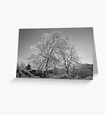Trees in Snow - Borga Nari - Italia Greeting Card
