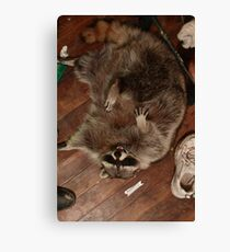 Raccoon Rampage Canvas Print