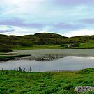 Water Lilies of the Western Isles von BlueMoonRose