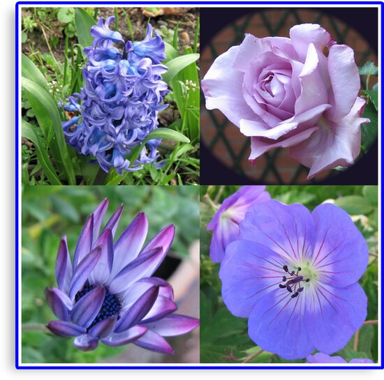Blue Beauties Collage -  A Floral Study in Blue by BlueMoonRose