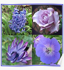 Blue Beauties Collage -  A Floral Study in Blue Poster