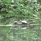Turtles by ArtOfE