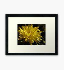 Lemon Zen Framed Print