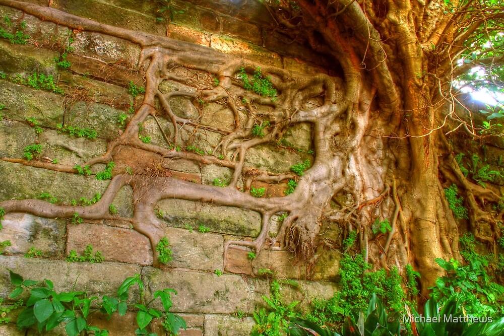 Amazing Roots by Michael Matthews