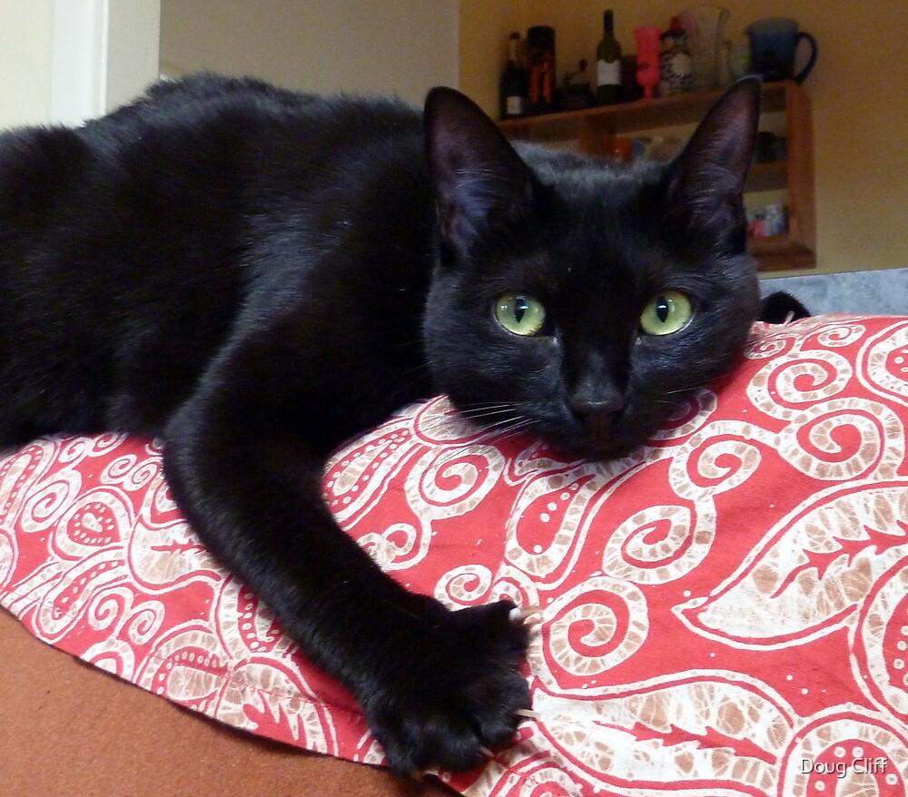 Black Cat by Doug Cliff