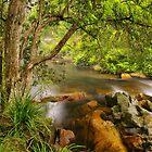 Brodribb River by Bette Devine