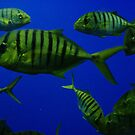 Sea World, Florida by klziegler