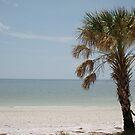 Tampa Bay by klziegler