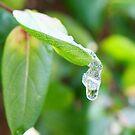 Let the rain kiss you by santoshputhran
