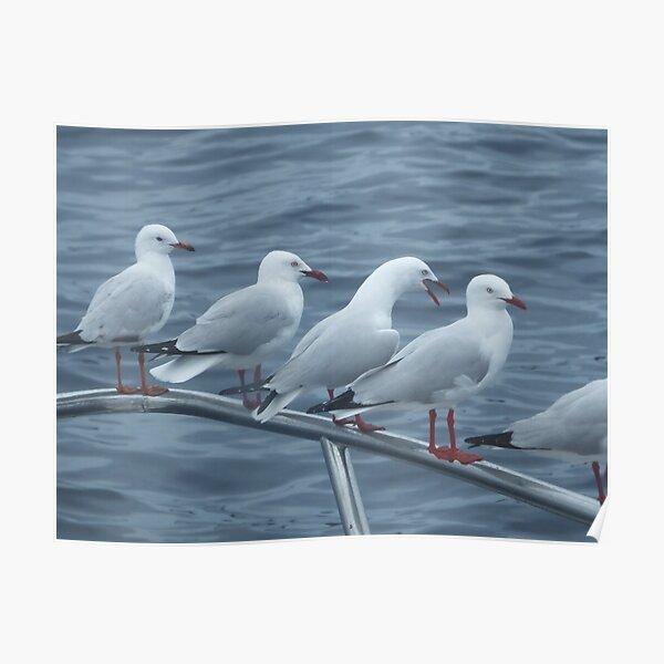 Railing seagulls Poster